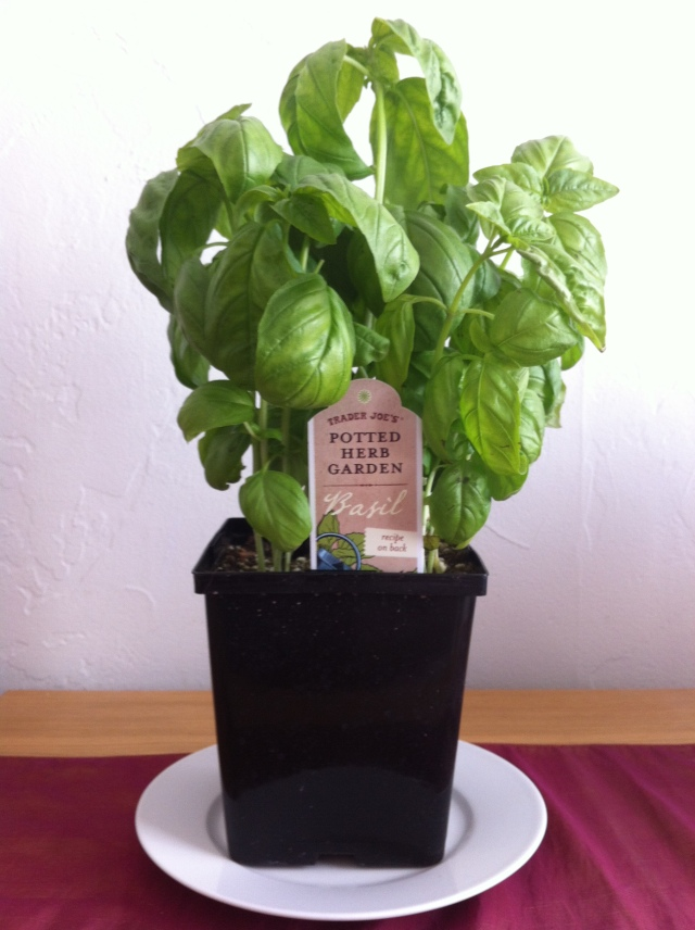 Basil, the King of Herbs