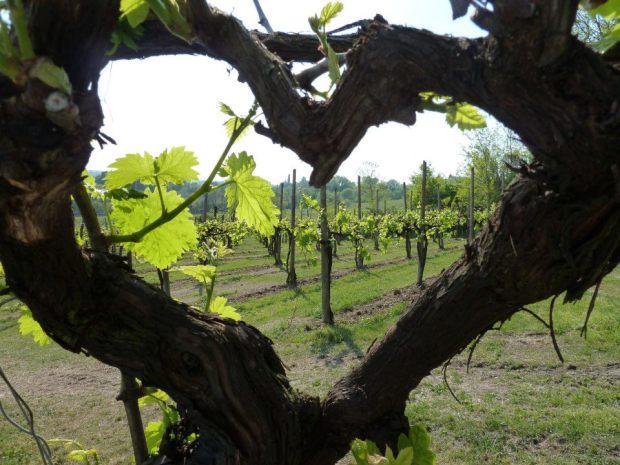 heart Castello Conti